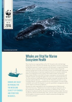 PlenaryForInfo 1 WWF: Factsheet - Whales are Vital for Marine Ecosystem Health